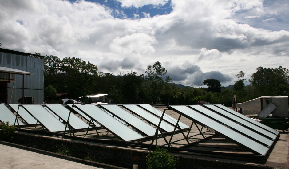 solar dried coffee drying