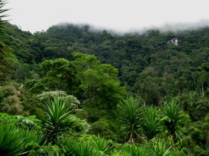 Pico Pijol Cloud Forest