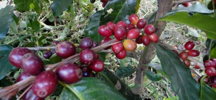 Harvest Series #4: The Cooperative's Bean Selection