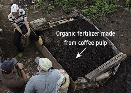 fertilizer-coffee-farms