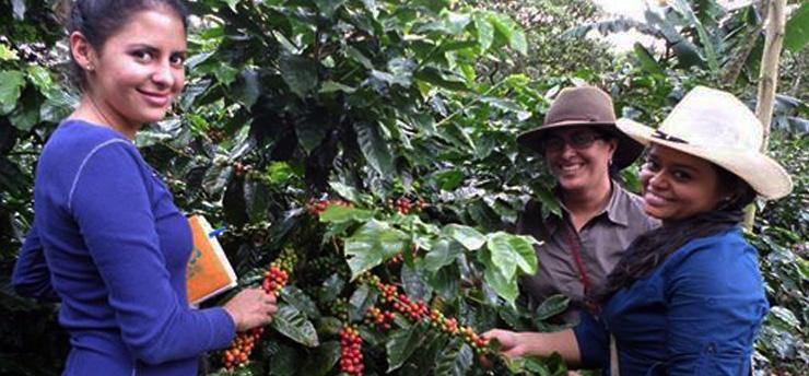 harvesting-coffee farms