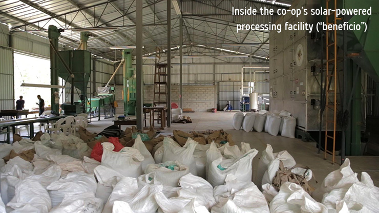 inside-solar-drying-coffee-farm