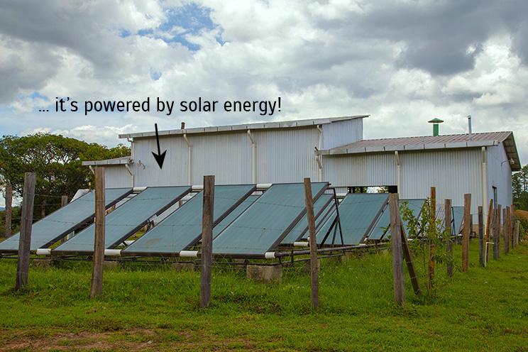 solar-power-coffee-drying